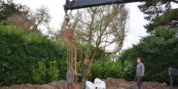 Tree planting project, Hampshire