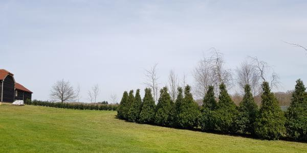 Specimen hedge planting, West Sussex